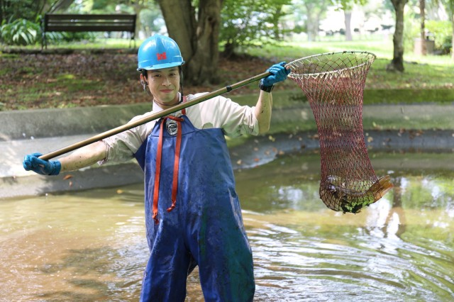 Sota Suga, an employee with Camp Zama's Directorate of Public Works, catches fish July 30 in the pond at Sagami General Depot's Shrine Park. The fish were being moved temporarily as part of a three-month restoration project in which the pond was cleaned and repaired, and an arched bridge was repainted.