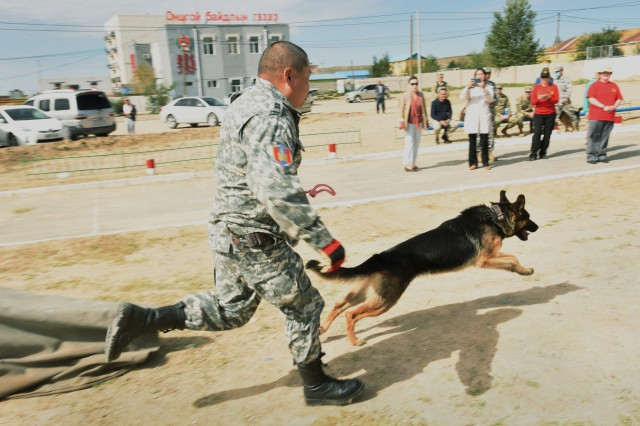 "Rescue dog handlers with the National Emergency Management Agency (NEMA) rescue unit train with their assigned dogs at the NEMA training area, Sept. 8, 2019 during Gobi Wolf 19, a multi national State Partnership Program exercise in Sainshand, Mongolia. GW 19 is hosted by the Mongolian National Emergency Management Agency and Mongolian Armed Forces as part of the United States Army Pacific's humanitarian assistance and disaster relief ""Pacific Resilience"" series."