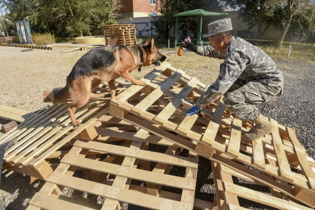 "Rescue dog handlers with the National Emergency Management Agency (NEMA) train with their assigned dogs at the NEMA training area with a series of difficult obstacles built to simulate uneven surfaces from a simulated earthquake, Sept. 9, 2019, during the Gobi Wolf 19 exercise in Sainshand, Mongolia. GW 19 is hosted by the Mongolian National Emergency Management Agency and Mongolian Armed Forces as part of the United States Army Pacific's humanitarian assistance and disaster relief ""Pacific Resilience"" series."