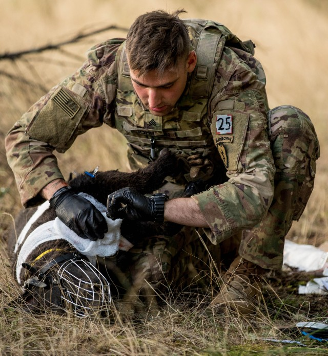 Army Best Medic Competition features military working dogs for first-time