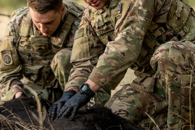 Sgt. Nicholas Taussig, left, and Sgt. Michael Johnson treat a simulated military working dog casualty during the CSM Jack L. Clark Jr. Army Best Medic Competition at Joint Base Lewis-McChord, Washington, Sept. 24, 2019.Twenty-eight two-Soldier teams from all around the world traveled to Washington state to compete in the finals to be named the Army's Best Medic. The competition is a 72-hour arduous test of the teams' physical and mental skills. Competitors must be agile, adaptive leaders who demonstrate mature judgement while testing collective team skills in areas of physical fitness, tactical marksmanship, leadership, warrior skills, land navigation and overall knowledge of medical, technical and tactical proficiencies through a series of hands-on tasks in a simulated operational environment.(U.S. Army photo by John Wayne Liston/Released)