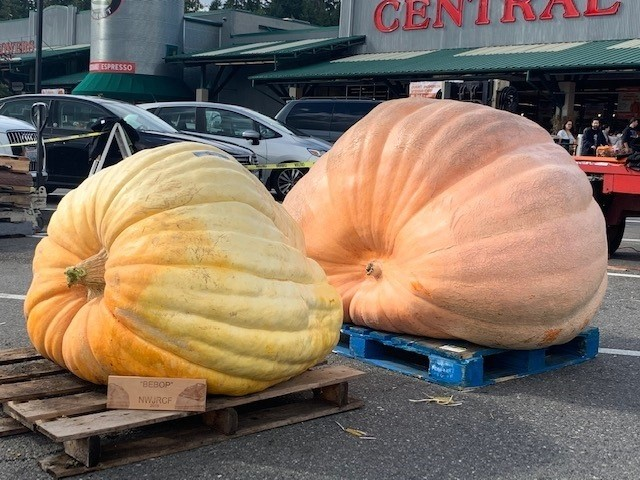 Giant pumpkins from JBLM put scare in competition