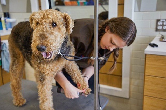 Petco will offer grooming services and a variety of pet supplies, food and toys when they open at Joint Base Lewis-McChord when the expanded Lewis Main Exchange expansion is completed in 2020.