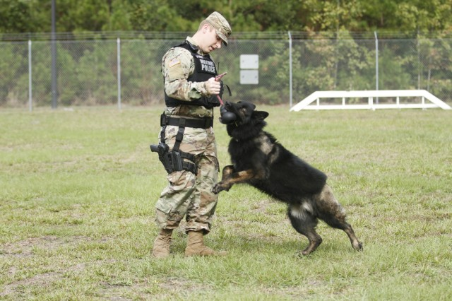 Spc. Brady Stanger, 93rd Military Working Dog Detachment, 385th Military Police Battalion, 16th Military Police Brigade, works on obedience training with an MWD, Nov. 5, 2019, at the kennels at Fort Stewart, Ga. The kennel on FSGA is a U.S. Army Forces Command medium-sized kennel and houses several military working dogs.
