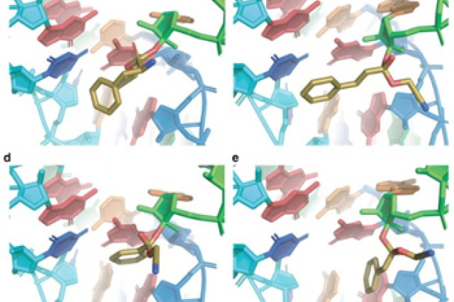 Synthetic biologists working on a U.S. Army project have developed a set of design rules that guide how ribosomes, a cell structure that makes protein, could lead to a new class of synthetic polymers that may create new high-performance materials and therapeutics for Soldiers.