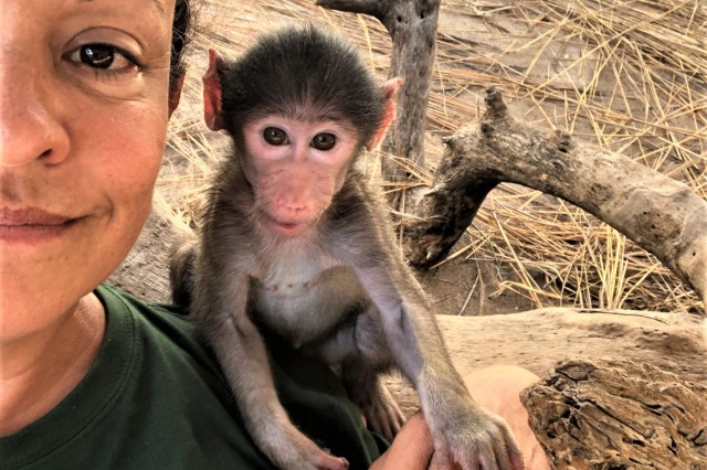 Orphaned baboon Bodhi bonds with Cammy in the nursery.