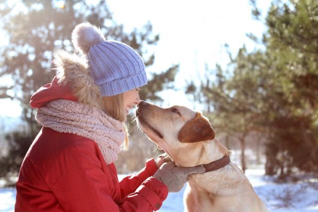 The benefits of dog walking