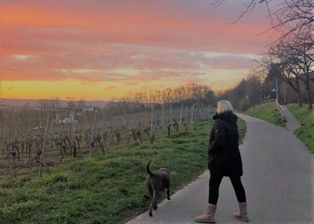 Martina Deaver and her dog Metro taking an evening stroll.