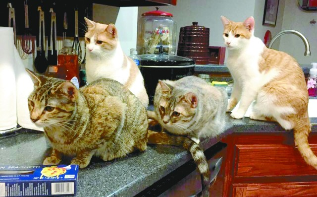 The Cannon feline family, from left: Mouse (runt of the litter); Lurlene, matriarch of the furry feline clan; Pinkie; and Mini Me, the only male of the group.
