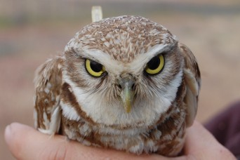 Camp Umatilla helps make home for burrowing owls