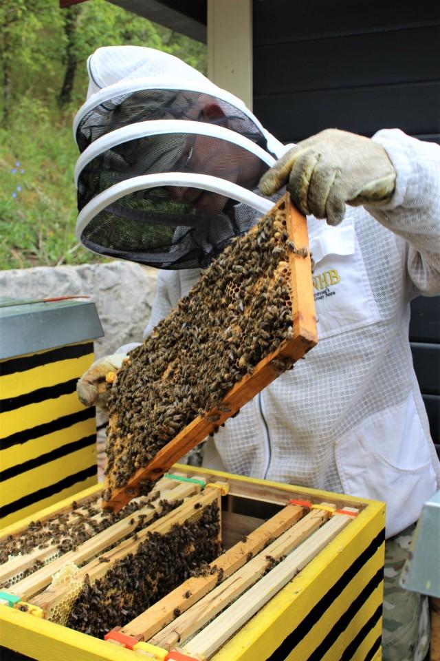 Beekeeping at Urlas