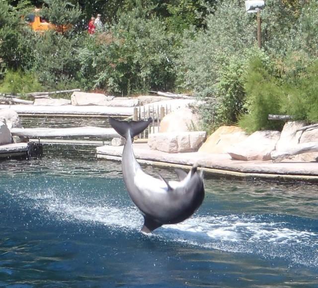 Trained dolphins jump in the Nürnberg Tiergarten