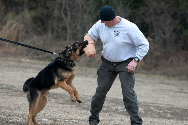Army scientists develop a realistic canine bite sleeve trainer to improve the performance of military working dogs.