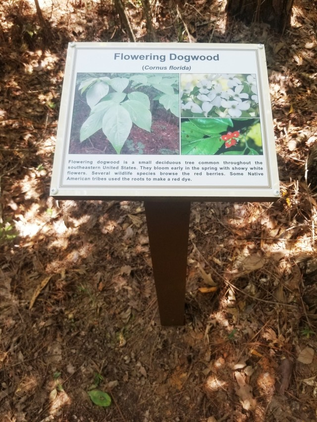 The flowering Dogwood sign is one of 31 new signs posted along the Marion Bonner nature trail next to native Louisiana trees and plants. The signs are part of the recent improvements made to the nature trail.