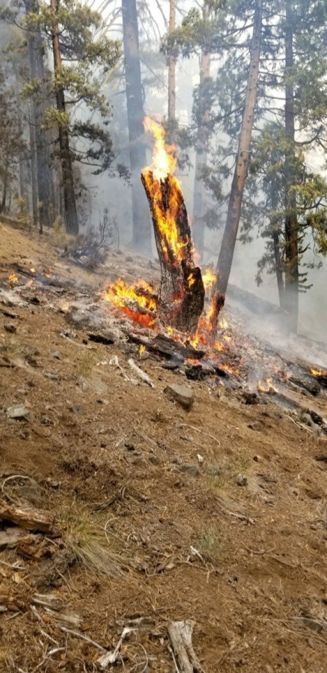 A piece of timber burns at a fireline constructed by fire and emergency services personnel from Sierra Army Depot, during wildfires outside of Susanville, Calif., mid-August 2020. Sierra Army Depot -- which is responsible for delivering materiel readiness to the U.S. Army -- has mutual aid agreements with several fire departments throughout Lassen County, California to deliver fire and emergency support when available.A series of wildfires has burned more than 30,000 acres of land near Susanville. Sierra Army Depot is located approximately 30 miles south of Susanville, in Herlong.