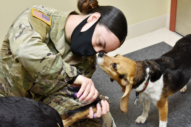 Layla, a beagle, sniffs Spc. Stacey Martin, noncommissioned officer in charge of the Camp Zama Veterinary Treatment Facility, as she clips the nails of Roxy, a shepherd mix, during an appointment at the facility at Camp Zama, Japan, Aug. 25.