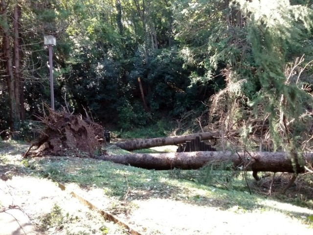 A downed tree in Dewey Park, Camp Zama, Japan, after Typhoon Hagibis in October 2019.