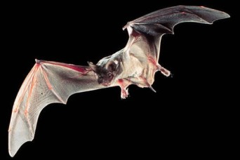 TEAMWORK -- Bats vacate Fort Rucker Fitness Center, focus moves to prevention