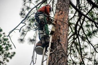 Climbing the pines, wildlife biologists put in ready-made homes to help woodpeckers thrive