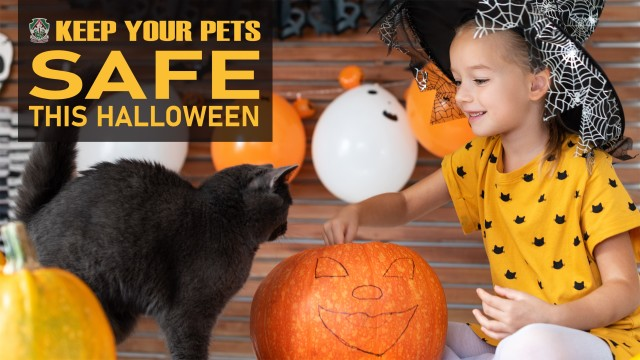 Halloween is right around the corner, and while it may be the spookiest night of the year for people, always remember to keep your four-legged friends safe. (U.S. Army Graphic by Amber Kurka)