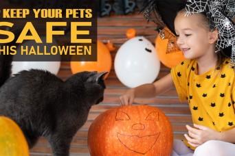 Halloween pet safety in Hawaii