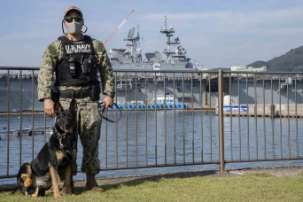 Alma learns to walk again: Army, Navy join forces to help working dog heal
