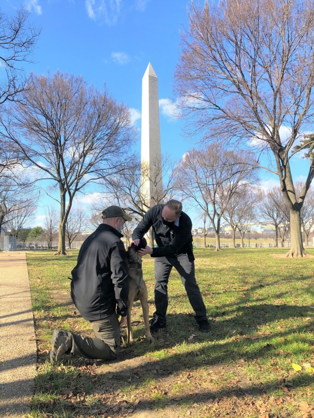 U.S. Army veterinarian, Maj. Miles Looman-Nelson, provides point-of-injury care for a working dog near the Washington Monument prior to the 59th Presidential Inauguration in Washington, D.C., Jan. 20, 2021. (U.S. Army photo by Spc. Victoria Albanese)
