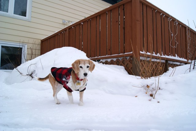 Protecting pets from the cold