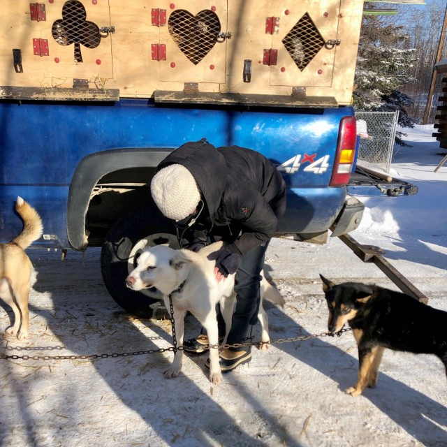 Maj. Rachel Acciacca, a regional veterinary clinical consultant with Public Health Command Europe, examines a dog during the 2021 Iditarod.