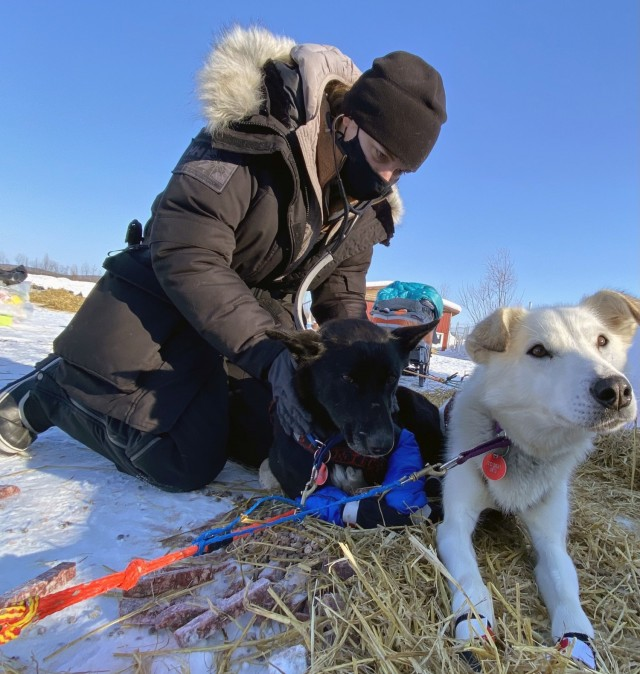 Maj. Gretchen Powers, the chief of Outpatient Services at Veterinary Medical Center Europe, examines a dog during the 2021 Iditarod.