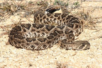 Snakes! Warmer temperatures bring out more than blooms