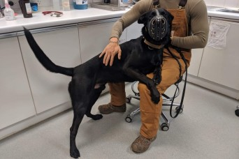 RAF Feltwell VTF provides lifesaving emergency care for military working dog