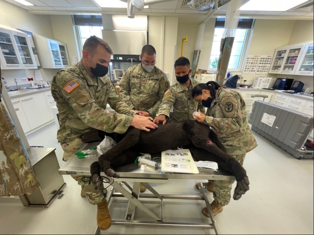 Vicenza VTF staff, combat medics and military working dog handlers performing trauma care on HERO.