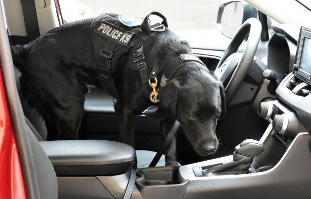 Parker, a K-9 narcotics detection dog with the Santa Cruz Police Department, practices searching vehicles during vehicle interdiction training at the Stilwell Community Center, Ord Military Community, July 13.