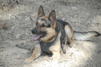 DOD program ensures health of man's best friend to support military readiness
