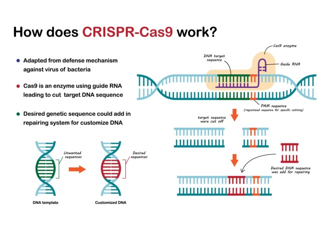 """CRISPR-Cas9 is a genome editing tool that is creating a buzz in the science world, according to yourgenome.org. It is """"faster, cheaper and more accurate than previous techniques of editing DNA and has a wide range of potential applications."""""""