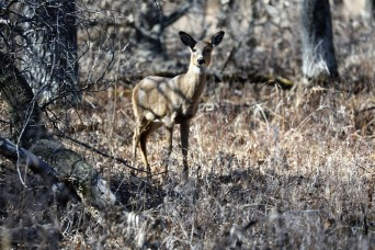 2021 archery deer season underway; Fort McCoy hunters must make sure to have necessary permits, licenses